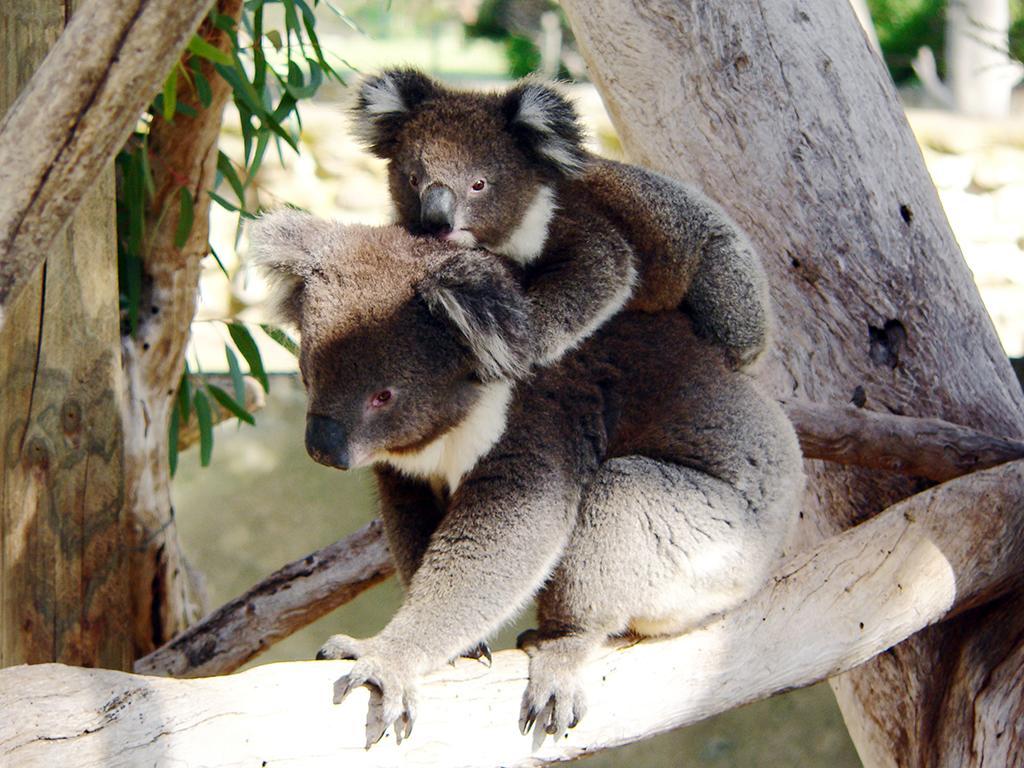 Australie: les Incontournables