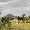 Réussir son safari en Afrique du Sud