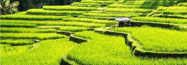Partez à la découverte de l'île des Dieux aussi appelée Bali