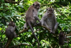 monkey forest 7