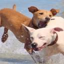 Les formalités à suivre pour un voyage dans l'Union Européenne avec votre chien