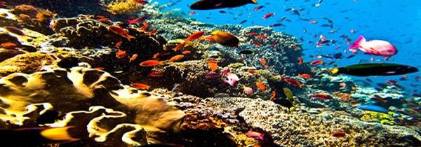 Quel spot de plongée choisir pour un séjour de plongée inoubliable à Bali ?