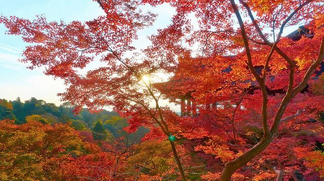 printemps kyoto