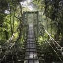 Visiter les parcs en Malaisie: une expérience unique et variée