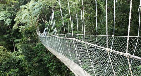 Pont suspendu taman negara