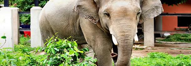 Zoo de Phnom Ta Mao et éléphants du Mondulkiri