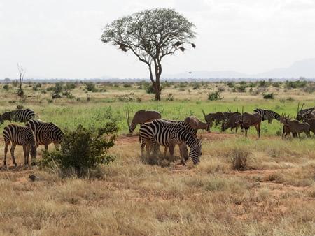 safari-kruger-3