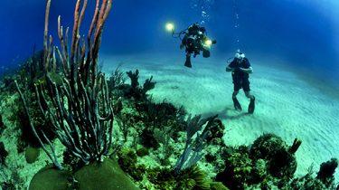 Partir pour un séjour plongée en Corse