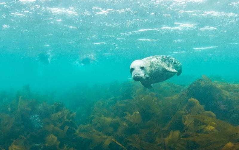 snorkeling bretagne