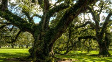 Visite en Louisiane : découvrir ses plantations et le Pays Cajun