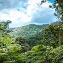 La Martinique : un paradis pour les amateurs de randonnées