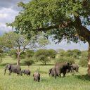 L'afrique, le plus grand zoo naturel du monde