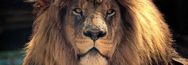 Top3 des réserves idéales pour un safari en Afrique du Sud