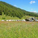 Voyager en camping-car au printemps