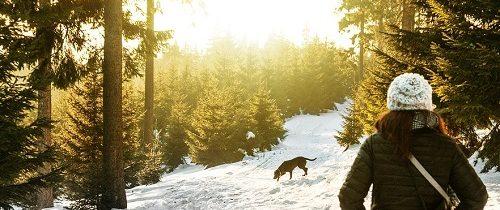 Comment faire garder votre chien pendant votre voyage ?