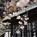 Comment rendre mémorable un voyage au Japon ?!