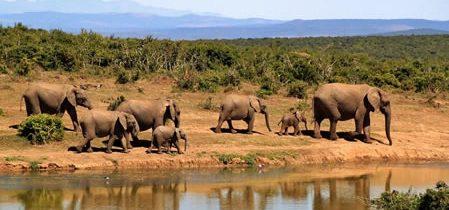 Réaliser un voyage de luxe en Afrique du Sud