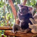 Top 5 des zoos à ne pas manquer en Australie