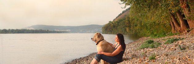 Voyager avec son chien : quelques destinations à retenir