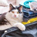 Tout savoir avant de voyager avec votre chat