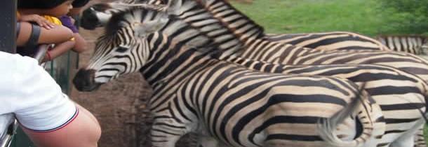 Le tourisme animalier de l'île Maurice