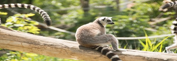 Voyager à Madagascar : où aller pour admirer les plus beaux spectacles de la nature ?