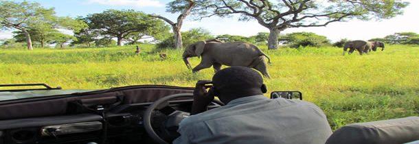 Réussir son safari dans le Kruger, nos conseils