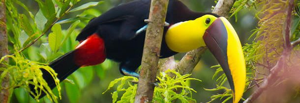 Le Costa Rica, un pays plus que fascinant
