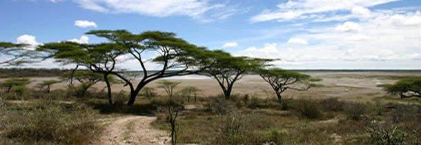 Les safaris sur plages du parc national saadani