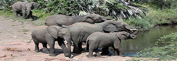 Top 3 des parcs naturels à visiter en Afrique du Sud