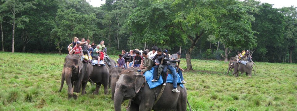 Le parc national de Chitawan : une randonnée inoubliable au cœur de la jungle