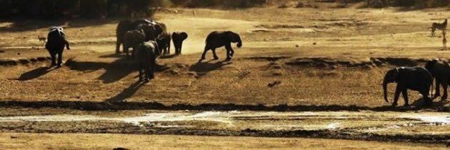 L'écovolontariat en réserve naturelle africaine
