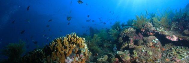 Voici 10 bonnes raisons de se mettre à la plongée sous-marine