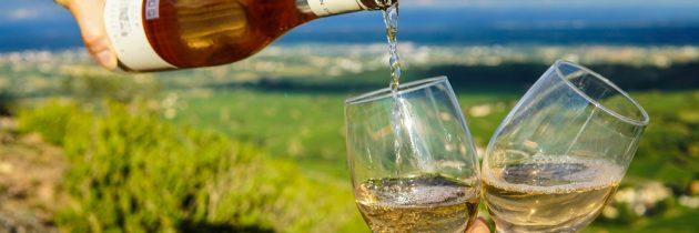 Afrique du Sud : envisageriez-vous de faire la route des vins ?