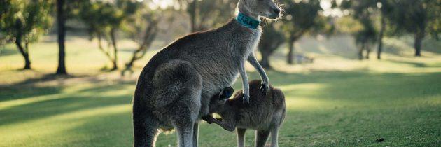 Tentez l'aventure et visitez le pays des kangourous pour un «séjour en Australie»