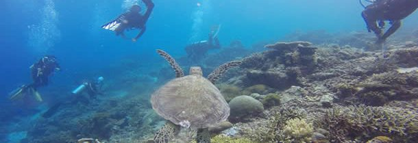 2 bienfaits des voyages de plongée pour la santé