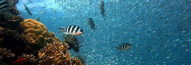 3 sites de choix où faire de la plongée au cœur des Galapagos